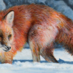 Mammal Prints