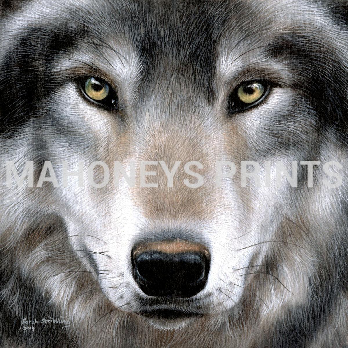 Print Name Grey Wolf Portrait Artist Sarah Stribbling